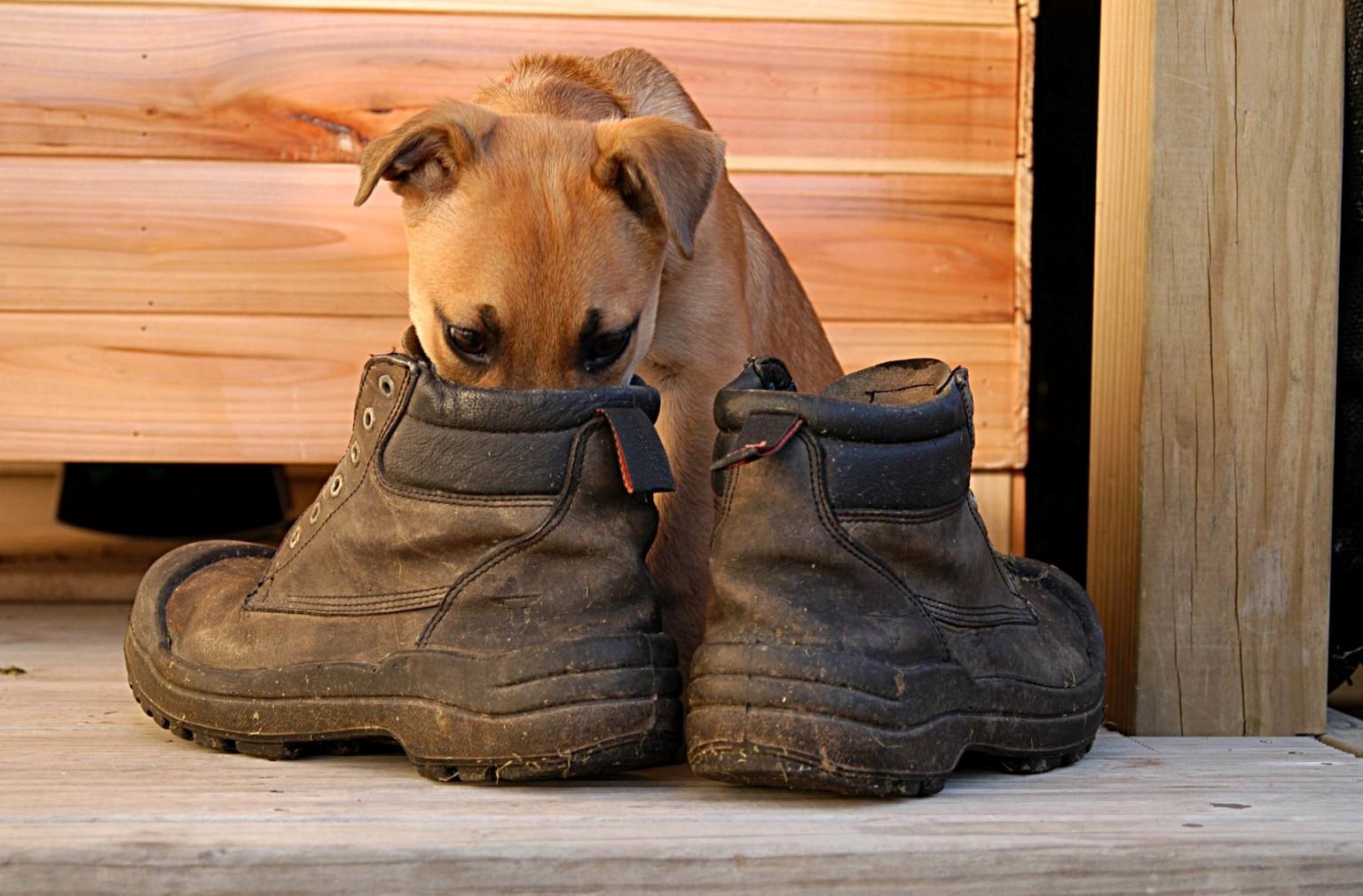 Ayakkabılarda koku nasıl ortadan kaldırılır: 10 tavsiye